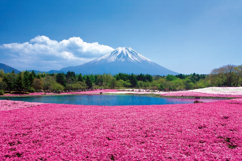 Private tour from Tokyo to Mount Fuji